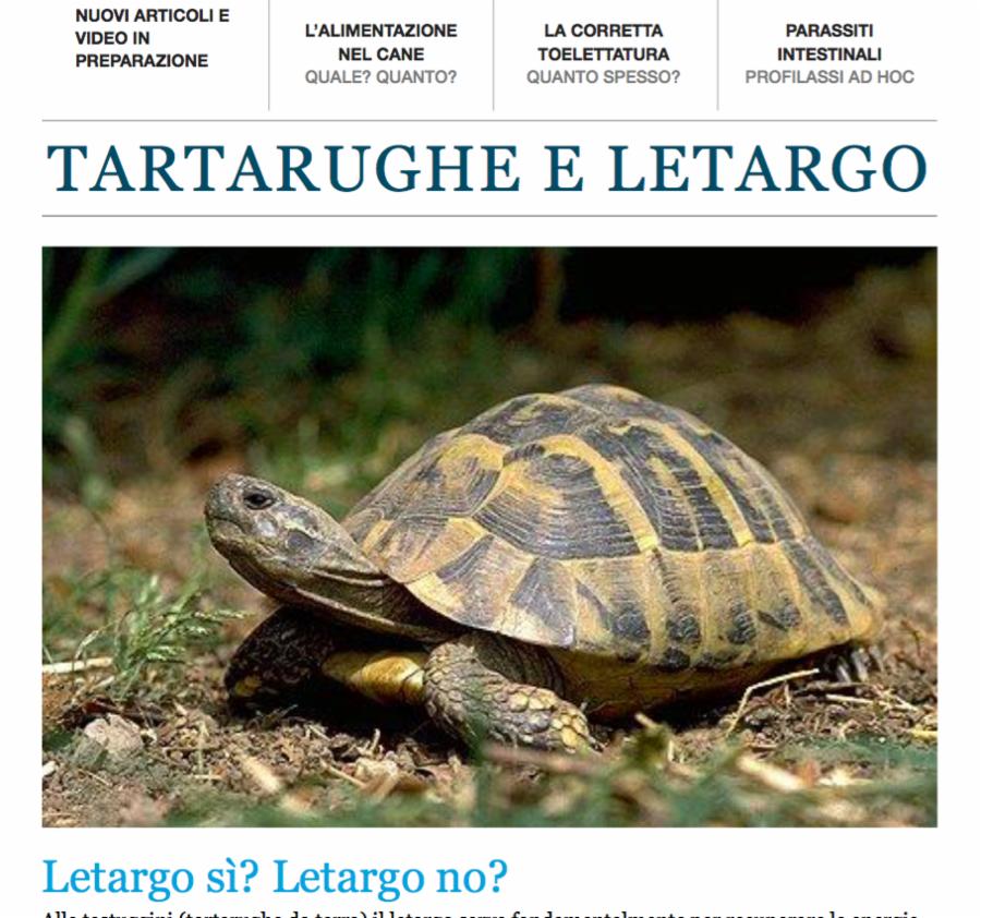 Il letargo delle testuggini o tartarughe di terra for Tartarughe di terra letargo
